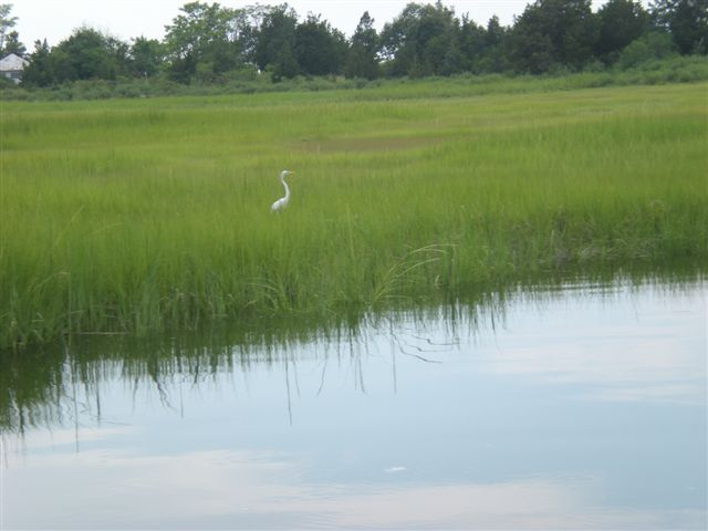 Get Ready for Discovery Wetlands Cruises