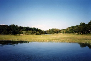 Summer Salt Marsh Programs