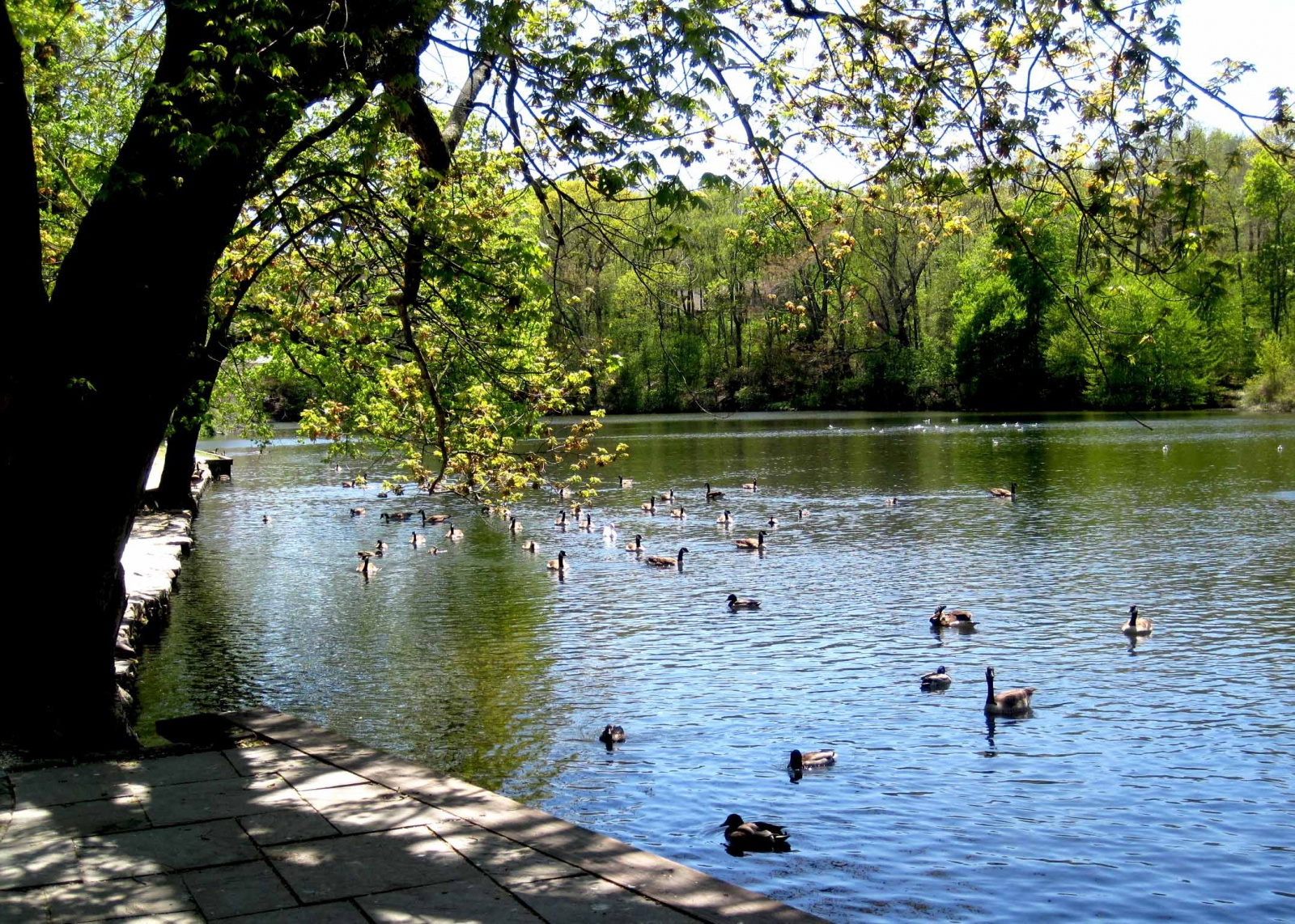 Stony brook mill pond for Design of maturation pond